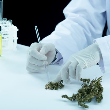 doctor hand hold and offer to patient medical marijuana and oil.